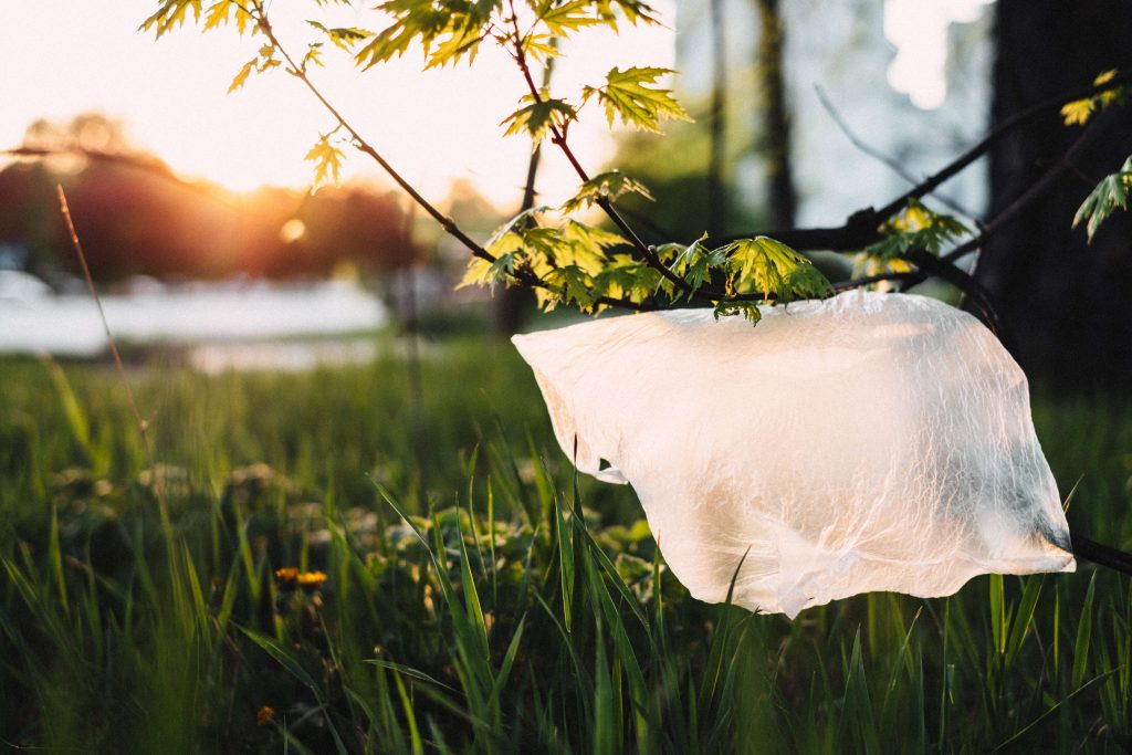 plastic bag caught in a tree by a river
