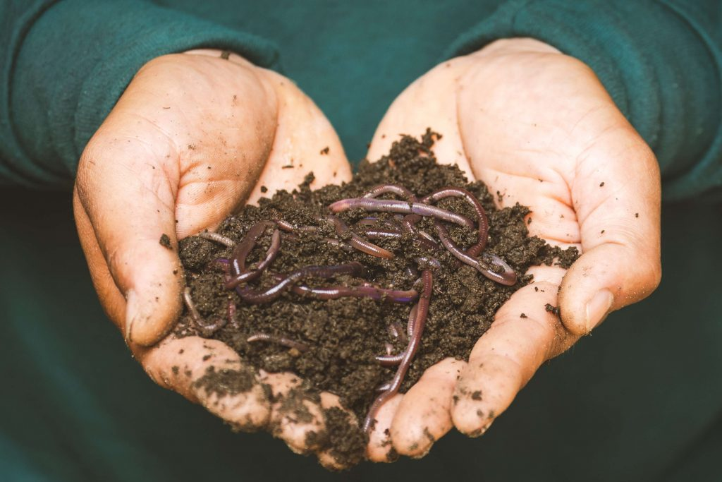 picture of person holding earthworms for how to compost with worms