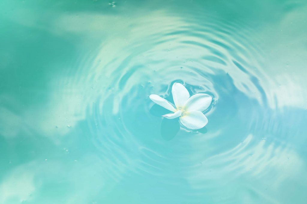 lily floating in water