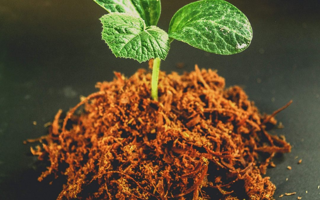 plant growing from pile of compost and soil